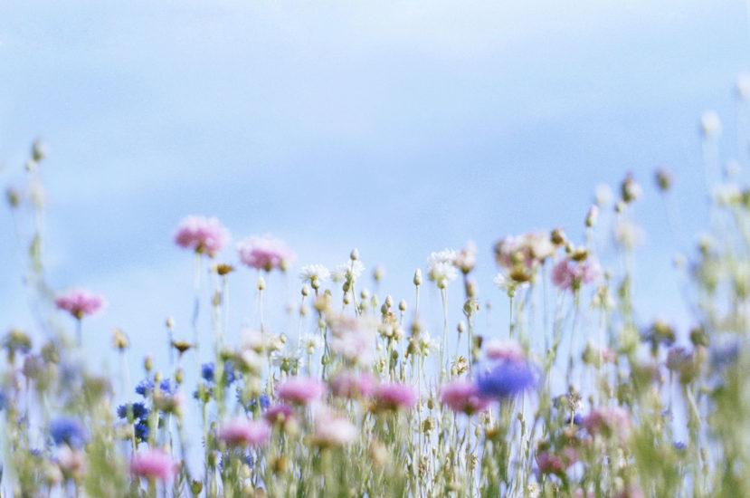 flower1_4
